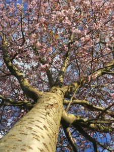 Blossom tree by Claudine Fignon